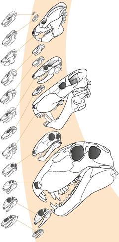 Fosile ashtu si tregohen në disa tekste shkollore dhe të paraqitura sipas shkallës së zvogëlimit