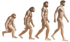 Zhvillimi i majmunëve në njerëz, sipas teorisë së evolucionit