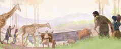 نُوح تے اوہناں دا خاندان جانوراں نُوں کٹھا کر کے کشتی ول لے کے آرہے نیں۔