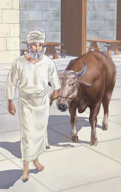 A priest in ancient Israel leads a sacrificial animal to the altar