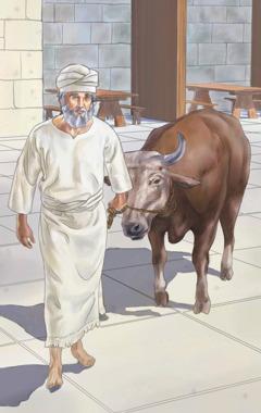 Ein Priester im alten Israel führt ein Opfertier zum Altar