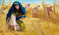 Ruth humbly picking up barley behind the workers in the field