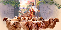 A shepherd opens a door and a large flock of sheep enters into the sheepfold