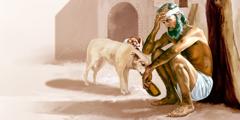 Куче ги лиже чиревите на Лазар