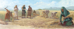 Ruth gathers grain in Boaz' field