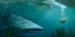 Jona skęsta jūroje ir link jo atplaukia didžiulė žuvis