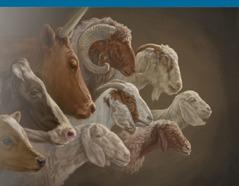 Eläimiä, joita voitiin uhrata temppelissä