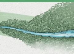 Dòng nước chảy chầm chậm trở thành dòng sông chảy xiết