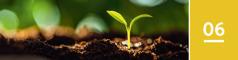 Lección 6. Una planta brota de la tierra en un día soleado.