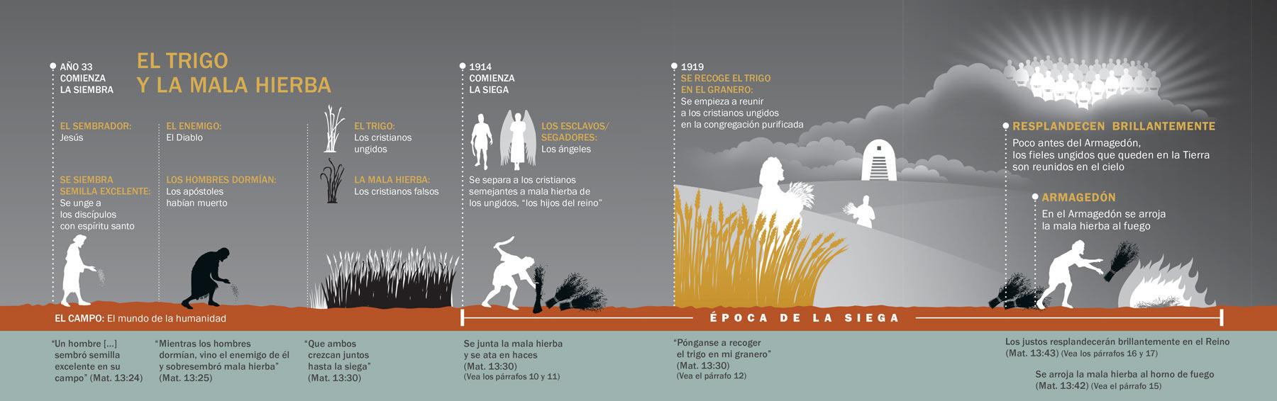 Entienda la parábola de Jesús del trigo y la mala hierba   Estudio