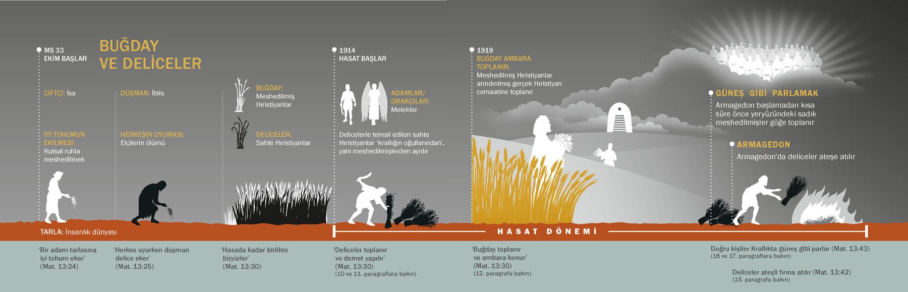 Geline Buğday Atılmasının Nedeni