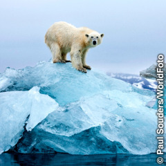 A polar bear on a small mound of ice