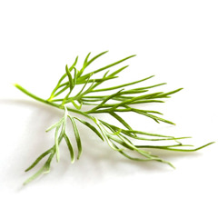 Dill (Aneth)