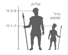 תרשים של גוליית הענק בהשוואה לחייל ממוצע