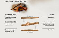 Oiti ivali ya tulwa kumwe i ninge oshiti shimwe—pefimbo lonale nopefimbo lopaife