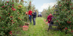 一個波蘭嘅傳道員同一個喺蘋果園工作嘅人分享聖經信息