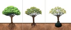 درختی که به خاک جدید منتقل شده است، بهتدریج ریشهاش در خاک رشد میکند