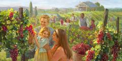 Families van verskillende agtergronde geniet dit om druiwe te pluk in die nuwe wêreld