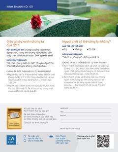 Một bông hồng được đặt trên một bia mộ