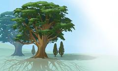 اشجار طويلة جذورها متشابكة تظلل اشجارا صغيرة