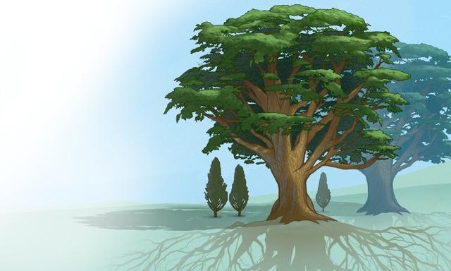 Árboles grandes con fuertes sistemas de raíces que dan sombra a árboles más nuevos