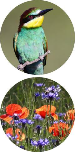 Pássaro; flores
