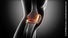 Anatomia di un ginocchio umano