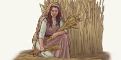 Izraelka pabirči žito na njivi.