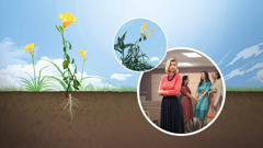 Collage: 1.A healthy wildflower with its roots in fine soil. 2.The same flower being choked by weeds. 3.Three sisters joyfully talking to each other at a Kingdom Hall while another sister stands alone and seems upset.