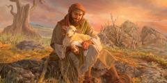 Un berger bande la patte d'un agneau qu'il porte sur ses genoux.