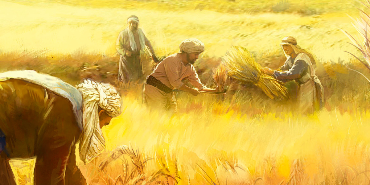 Jesus' Illustration of the Wheat and the Weeds | Simplified