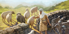 A shepherd separates sheep from goats