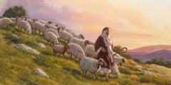 Sheep follow a shepherd down a hillside