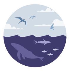 Vida marinha e criaturas voadoras.
