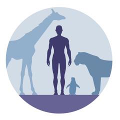 Animais terrestres e seres humanos.