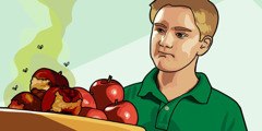 A young man looks at rotten apples