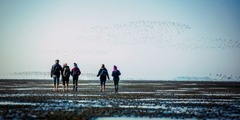 Jehovah's Witnesses walk on the seabed of the North Sea to reach three Halligen islets