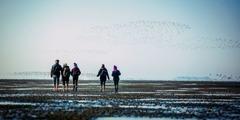 Jehovan todistajia kävelemässä kolmeen Halligenin saareen Pohjanmeren pohjaa pitkin