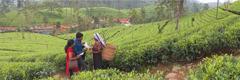 Jehova siene Zeijen prädjen en Sri Lanka