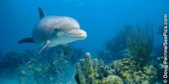 Ẹja dolphin