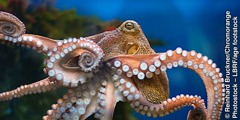 The flexible tentacles of an octopus