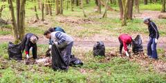 여호와의 증인이 우크라이나 리비프 근처의 숲을 청소하는 모습