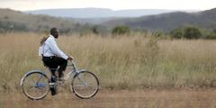 एक मनुष्य सायकलवर चालला आहे